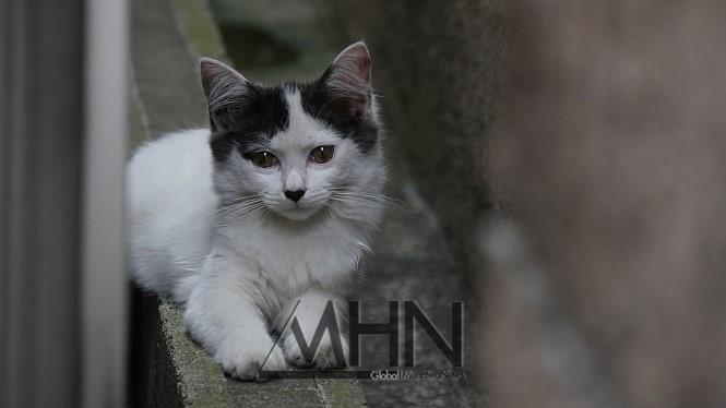[영알못의 600자리뷰] 우리의 등잔 밑 들여다보는 '나는 고양이로소이다'